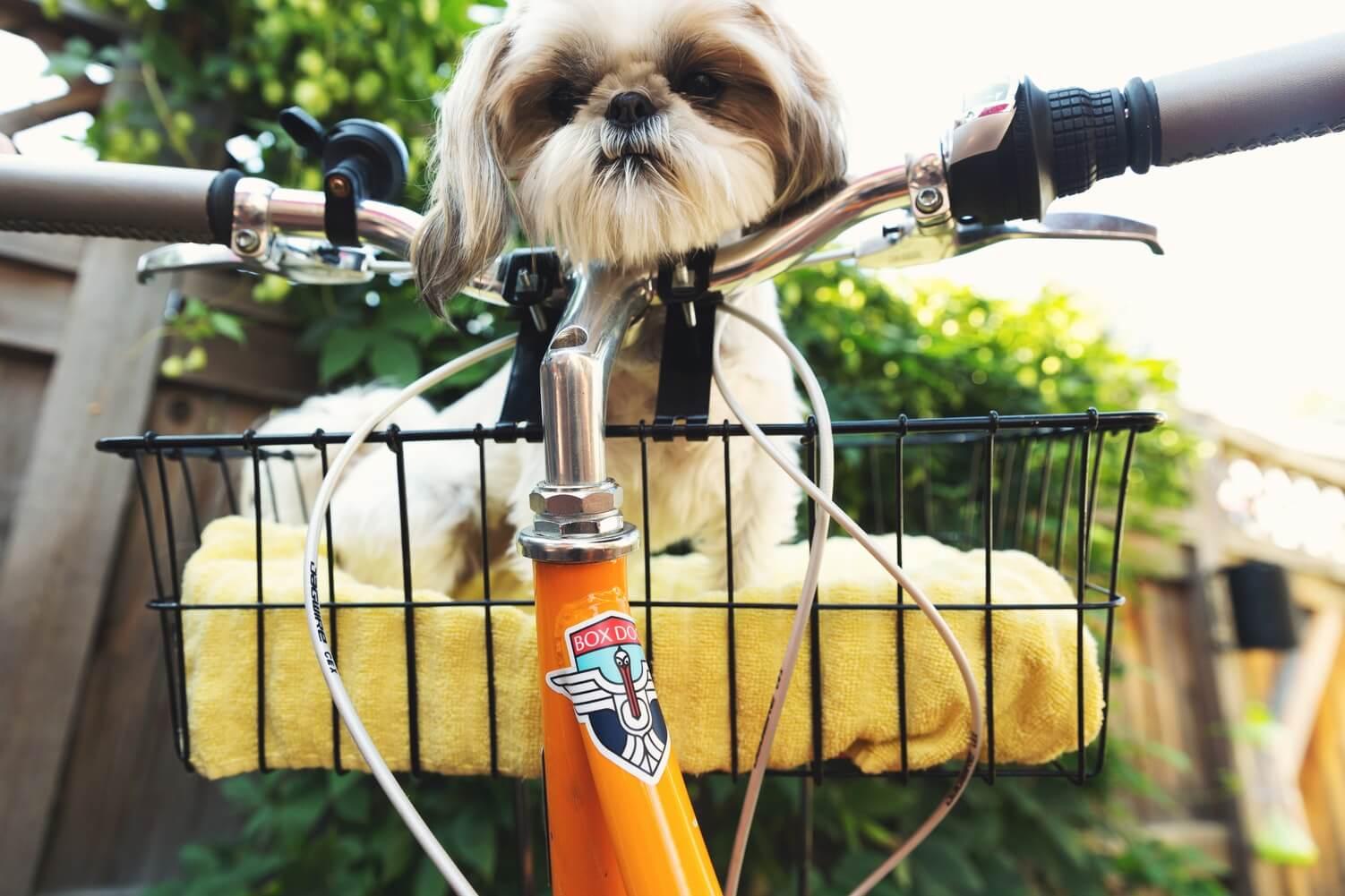 biciklizes-kutyaval