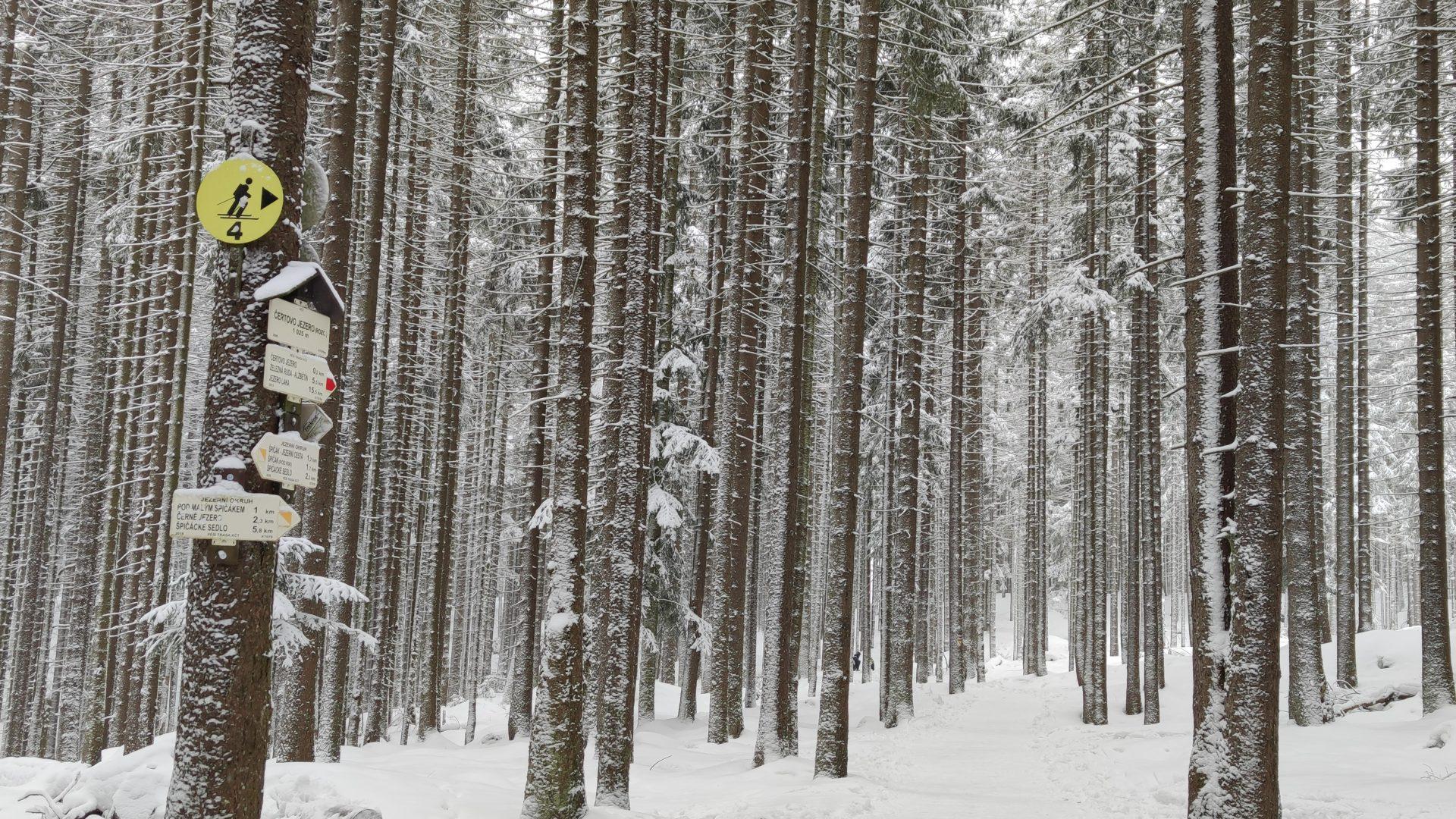 Šumava je přívětivá hlavně pro začínající skialpinisty. Foto: Michaela Bučková