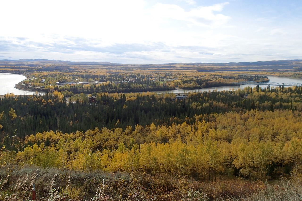 All the trees turn yellow in fall in the north
