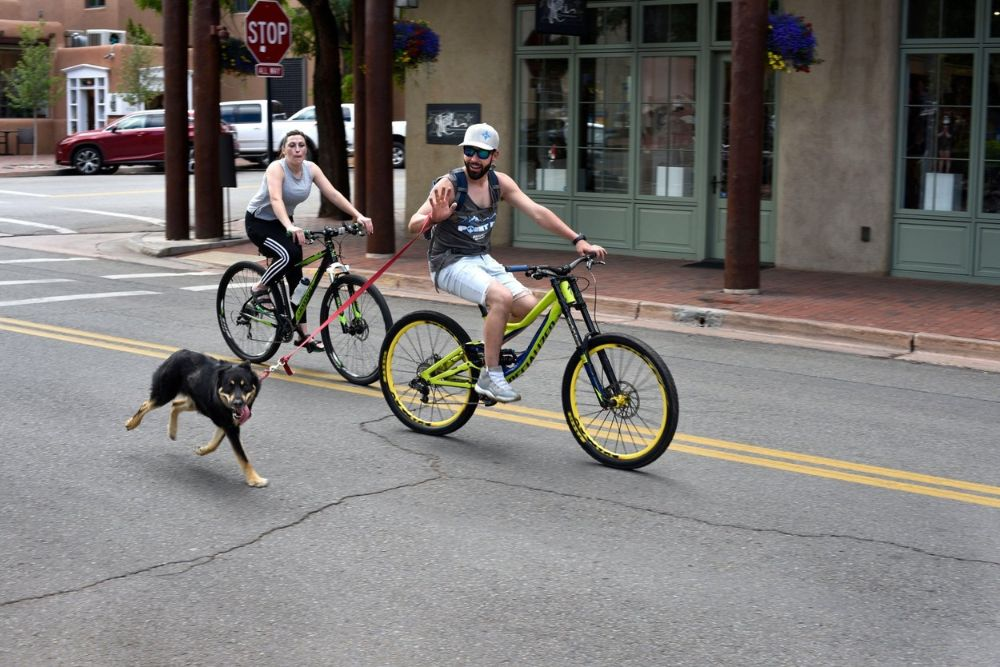 Biking with a dog